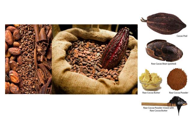 boabele de cacao crude si rezultatele presarii lor, la rece