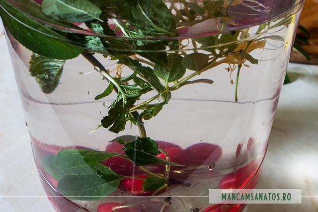 visine, menta si caprifoi (mana Maicii Domnnului), in apa, pentru apa enzimatica si probiotica