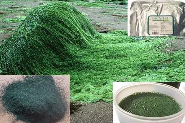 spirulina, alga si prousele sale