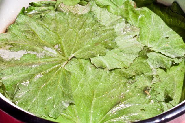 frunze de podbal pentru sarmale