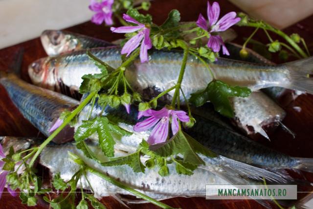 sardine si nalba de camp, salbatica, pentru supa picanta