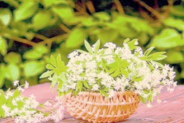 flori de sanziene albe(dragaici, floarile lui Santion)