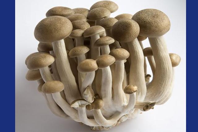 ciuperci Shimeji brune, (buna Shimeji)