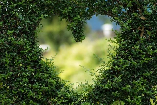 importanta postirii intermitente, in alimentatie (inima-natura)