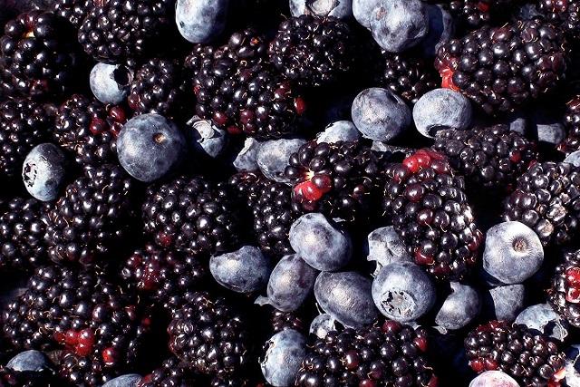 fructe negre de padure, sursa de resveratrol